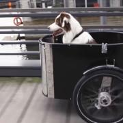 NIHOLA DOG – Das Lastenfahrrad für den Hund